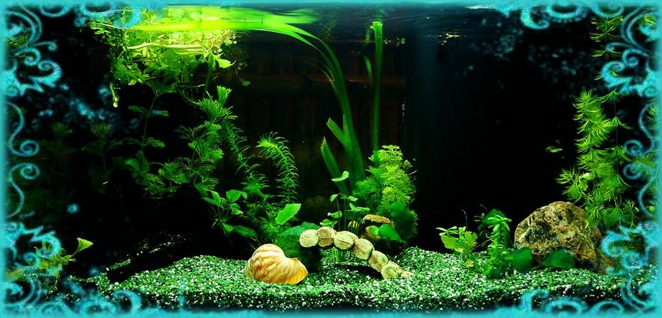 bienvenue dans notre aquarium identifier et traiter les algues dans un aquarium d eau douce