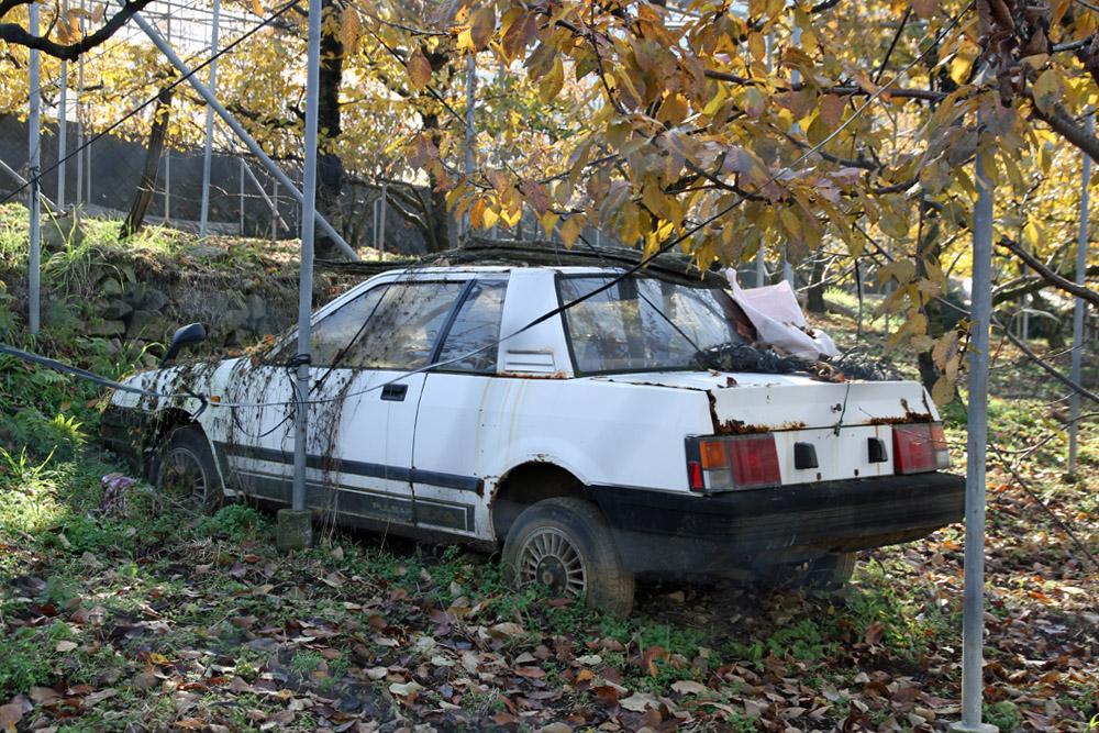 porzucone, opuszczone, japońskie, samochody, jdm, wraki, abandoned, japanese, cars