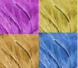 Colors of Straw ...........