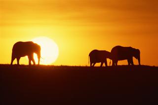 KES, Kenia