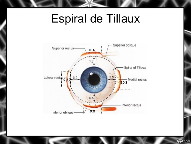 FISIOLOGÍA DE LOS MÚSCULOS EXTRA OCULARES | FISIOLOGÍA DE LA VISIÓN I