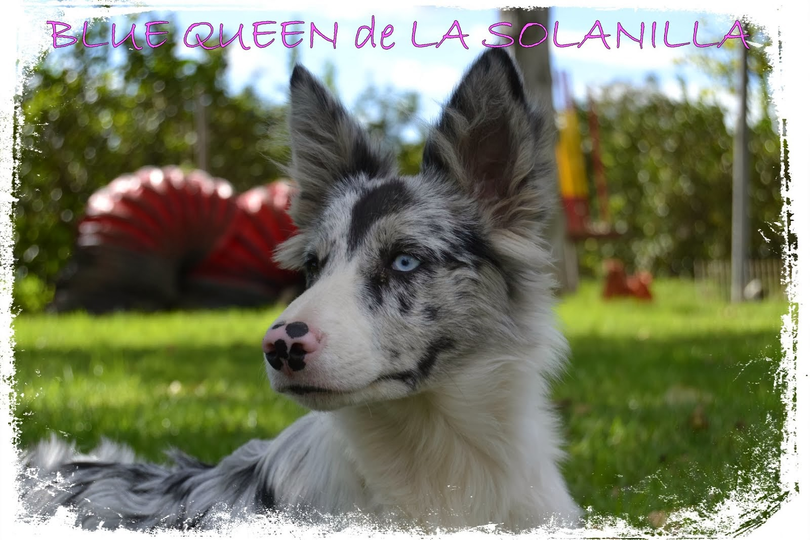 BLUE QUEEN de LA SOLANILLA