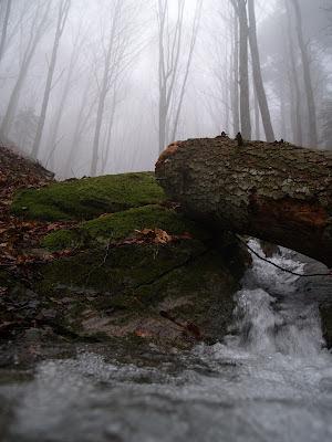 Nebbia nelle foreste casentinesi