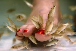 Doctor Fish