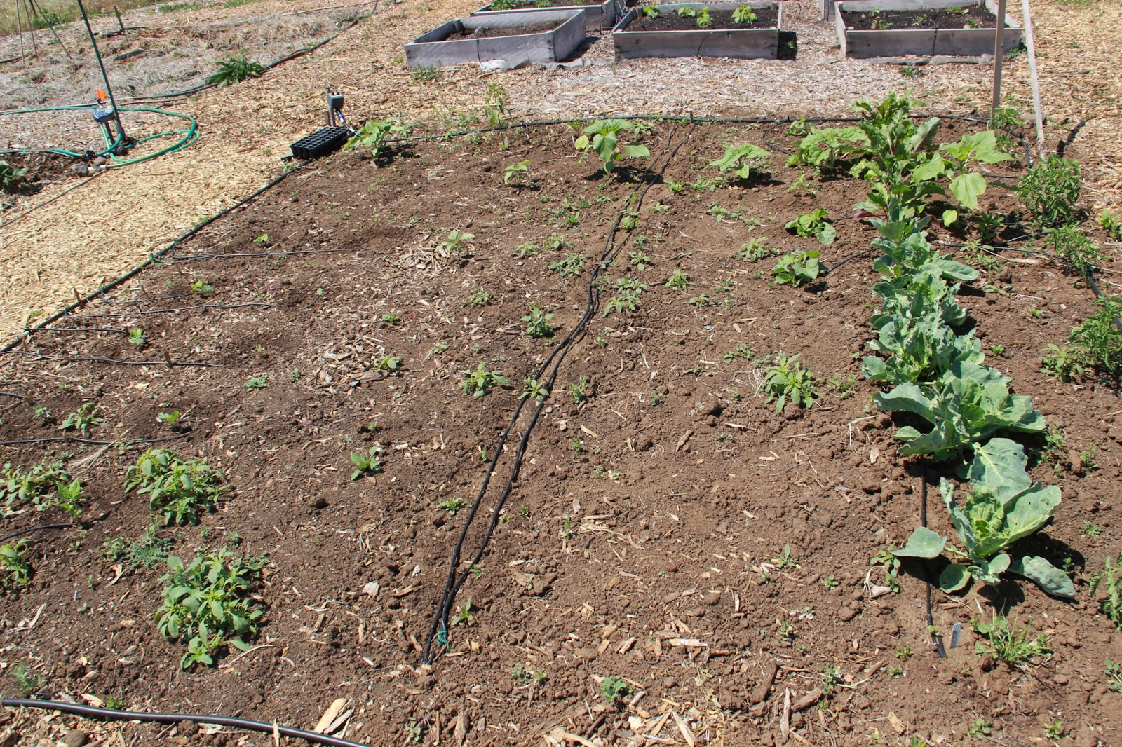 My First Garden: Photos: 7 different community garden plot designs