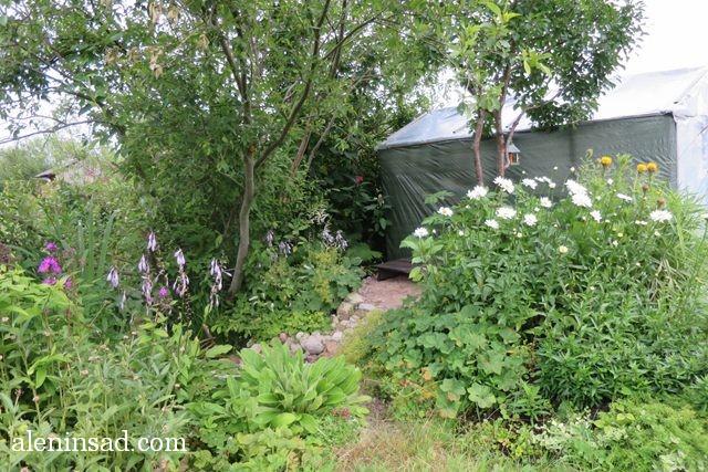 аленин сад, aleninsad, июль в саду, зелень в саду, овощи в июле, травы июля, опора-пирамида, фасоль, теплица,  тенистый уголок