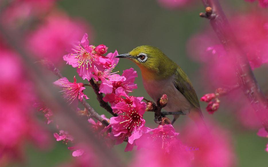 Güzel Kuşların Yüksek Çözünürlükte Duvar Kağıtları