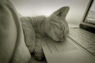 kucing dan laptop