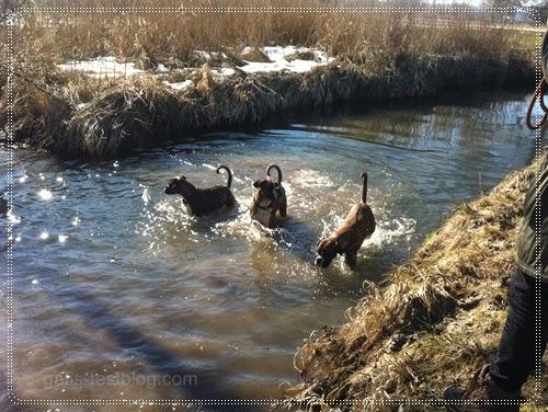 Spaß im Wasser - Boxer Amy Baxter und Apollo