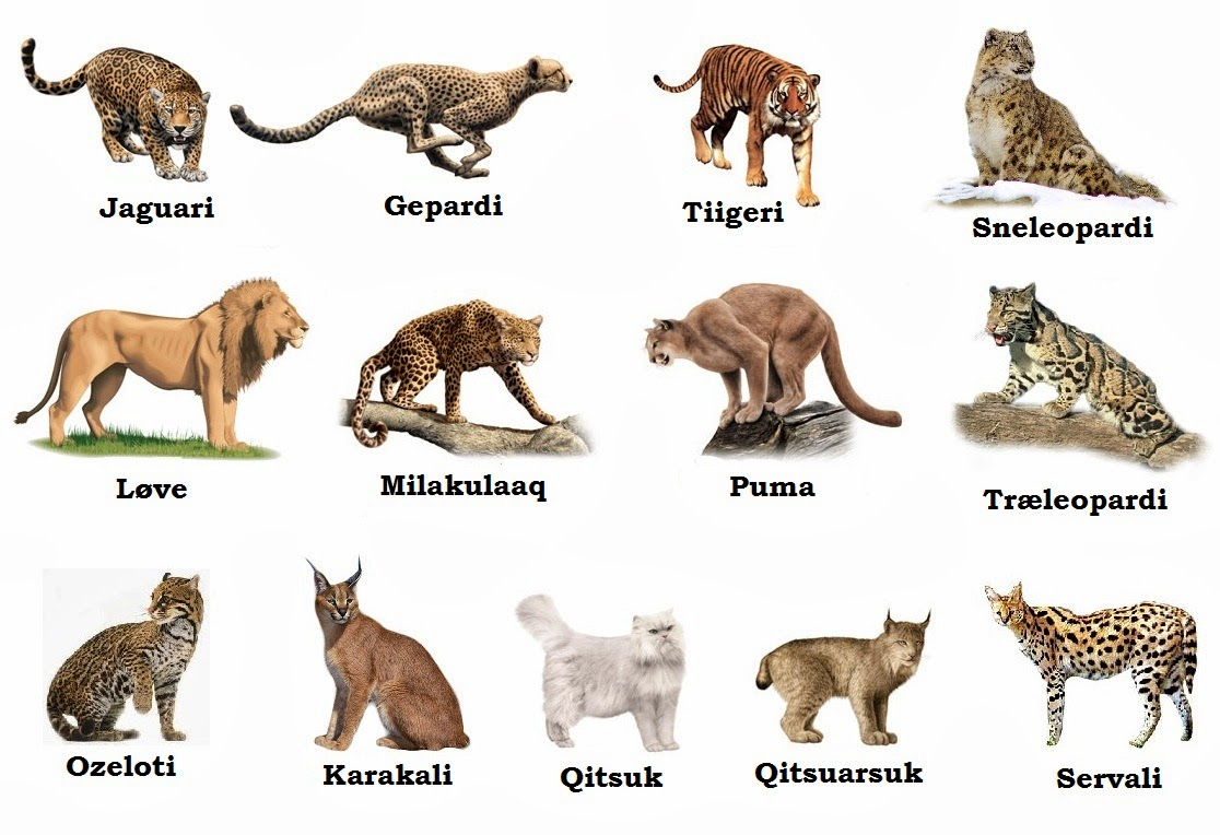 Pengetahuan Tentang Dunia Flora Dan Fauna Felidae Adalah Anggota
