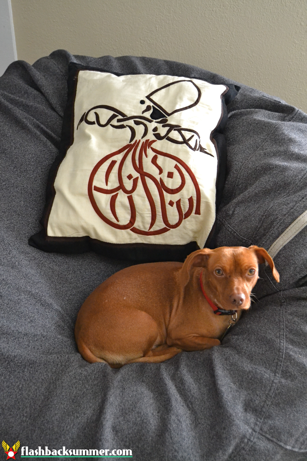 Flashback Summer: My Not-a-Magazine-Shoot Living Room - Egyptian Pillow, Viszla-dachshund
