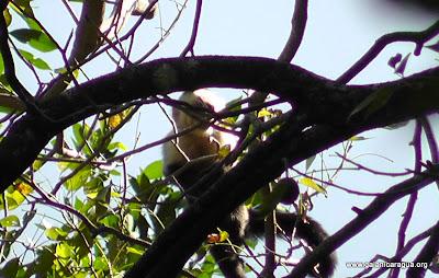 Nicaragua nature tours
