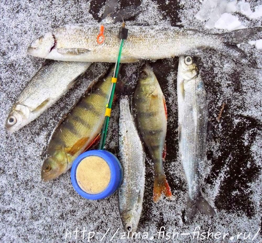 Зимняя рыбалка на Кубене