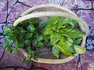 Basket of Bright Green Basil and Dark Green Parsley