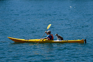 Paddler and dog on a kayak on Lake Wakatipu