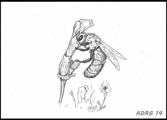 UN AMBIENTALISTA: Bocetos de naturaleza