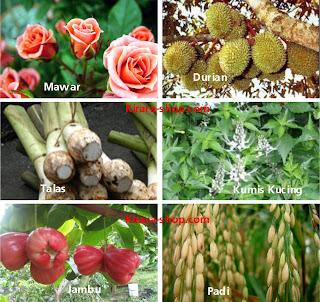 BUDIDAYA TANAMAN - Panduan budidaya tanaman hias, tanaman pangan ...