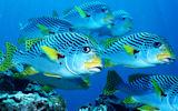Peces, corales y arrecifes en el fondo del mar