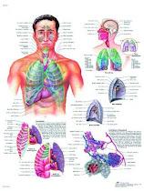 Aparato Repiratorio