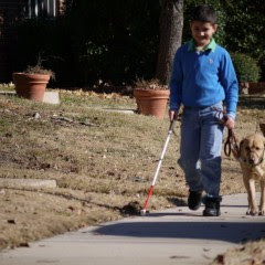 boy with cane walking yellow Lab