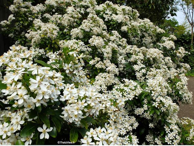 massif fleurs blanches Londres Dalston cour résidence