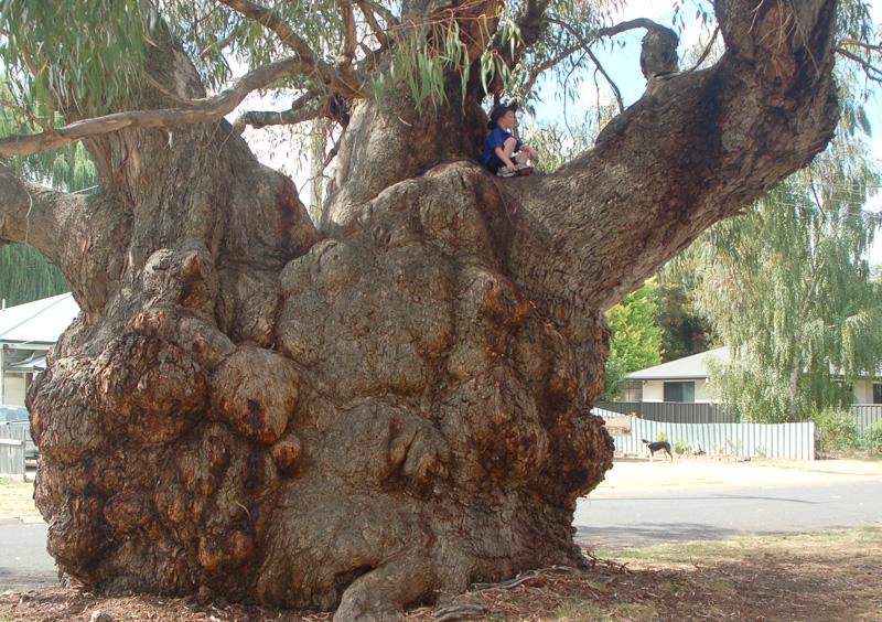 Butt Tree 118