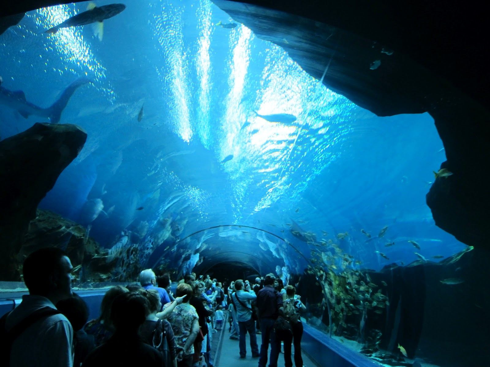 interesting things do you world s largest aquarium