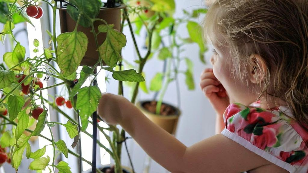 The nutritower indoor gardening made easy for Indoor gardening made easy