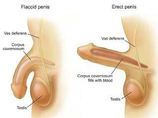 Penis hurts erect after sex