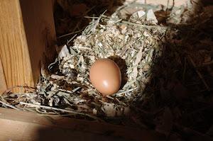 Egg-O-Meter