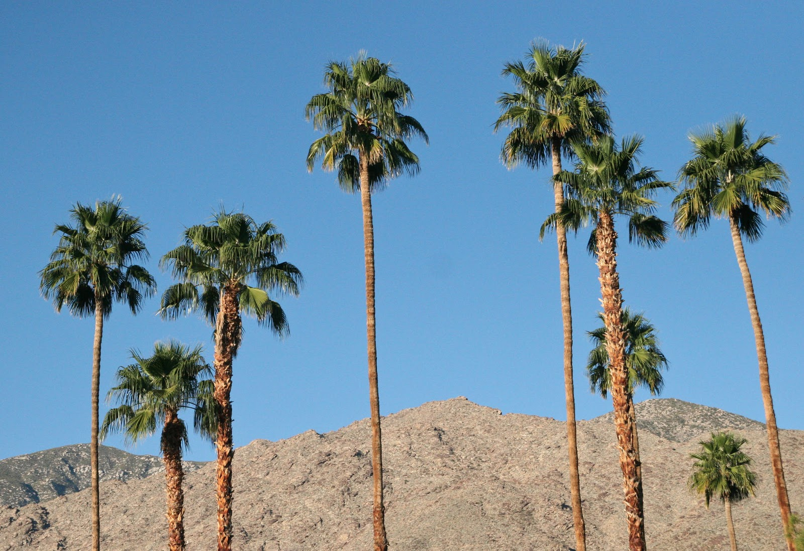 CaliforniaDesert Hot Springs Black Dating