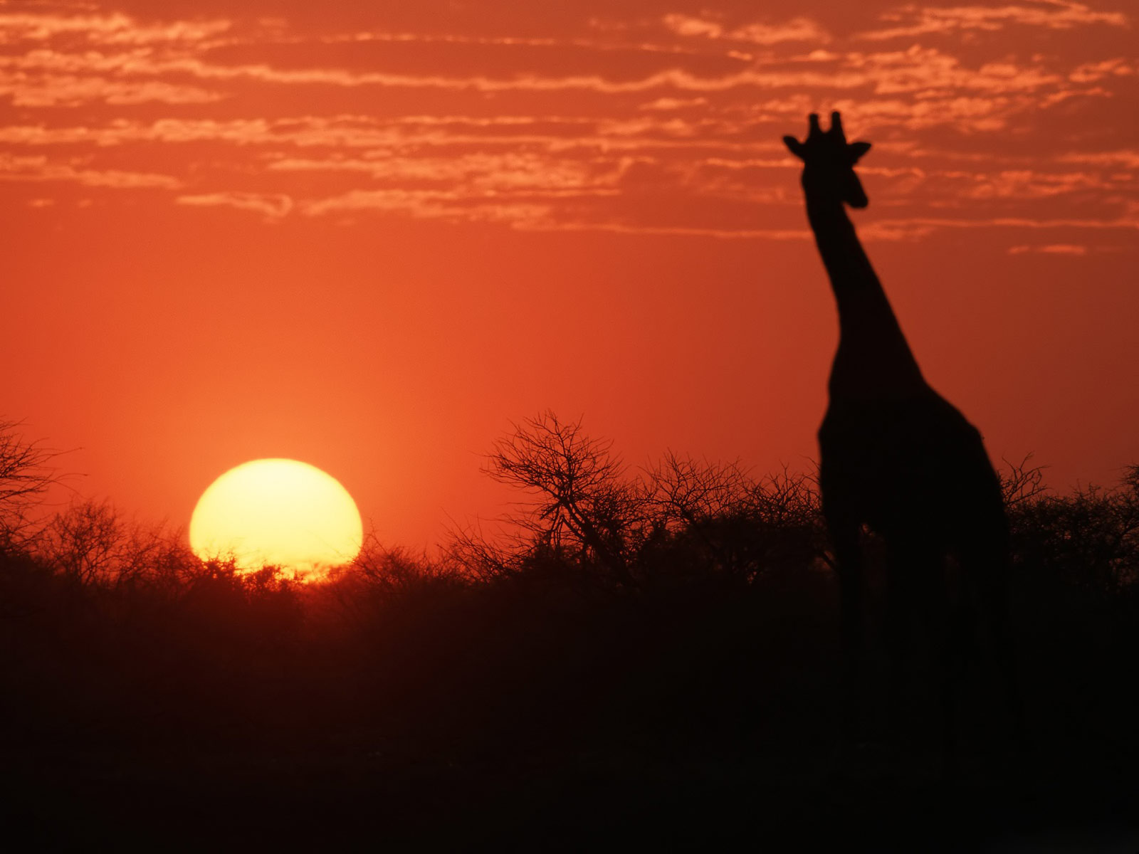 http://4.bp.blogspot.com/-5FED19Vhh1k/TcM1STpYkSI/AAAAAAAABPY/tXKk5HVlDis/s1600/African-Sunset-Wallpaper_0605201101.jpg