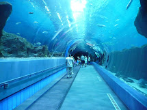 Atlanta Georgia Aquarium Tunnel