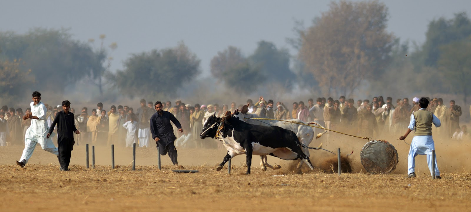 Traditional Bull Race in Khunda, Pakistan in HD Pictures