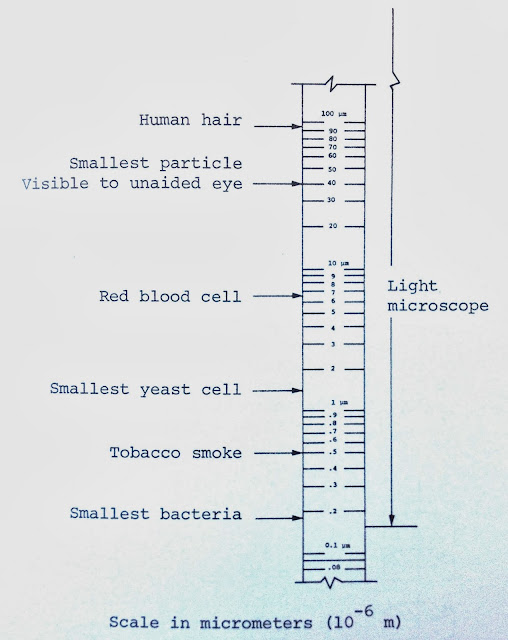 light microscope chart