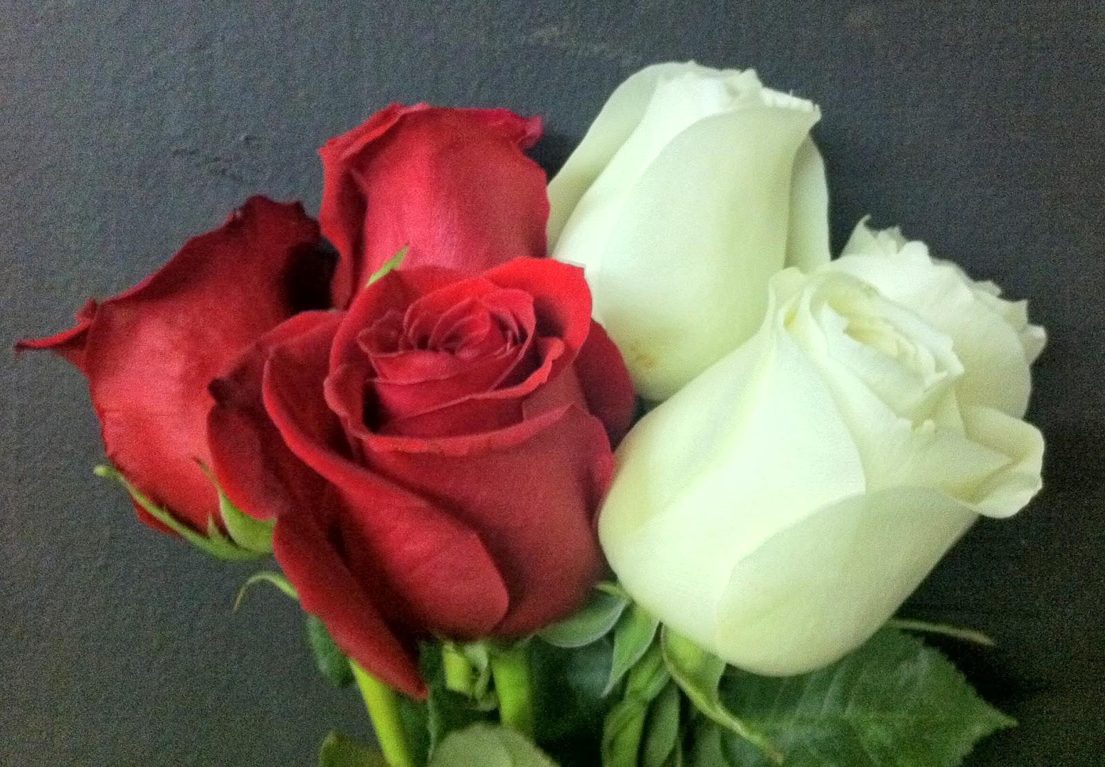 The Enchanted Petal: Rose