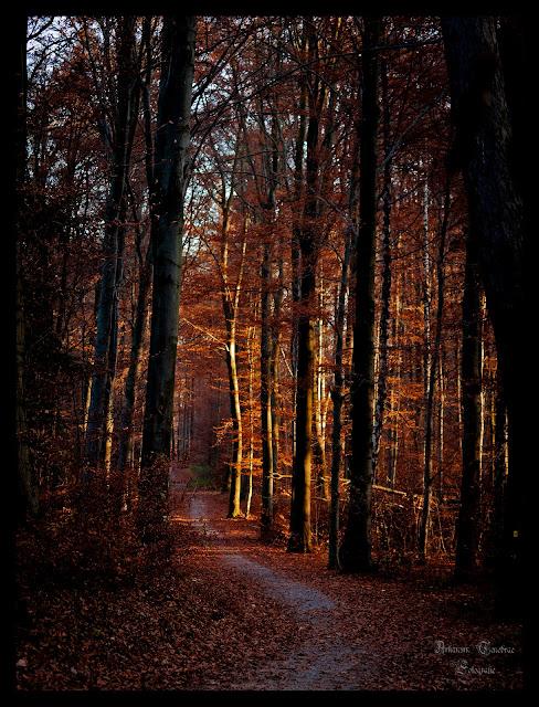 der Waldweg im Herbst