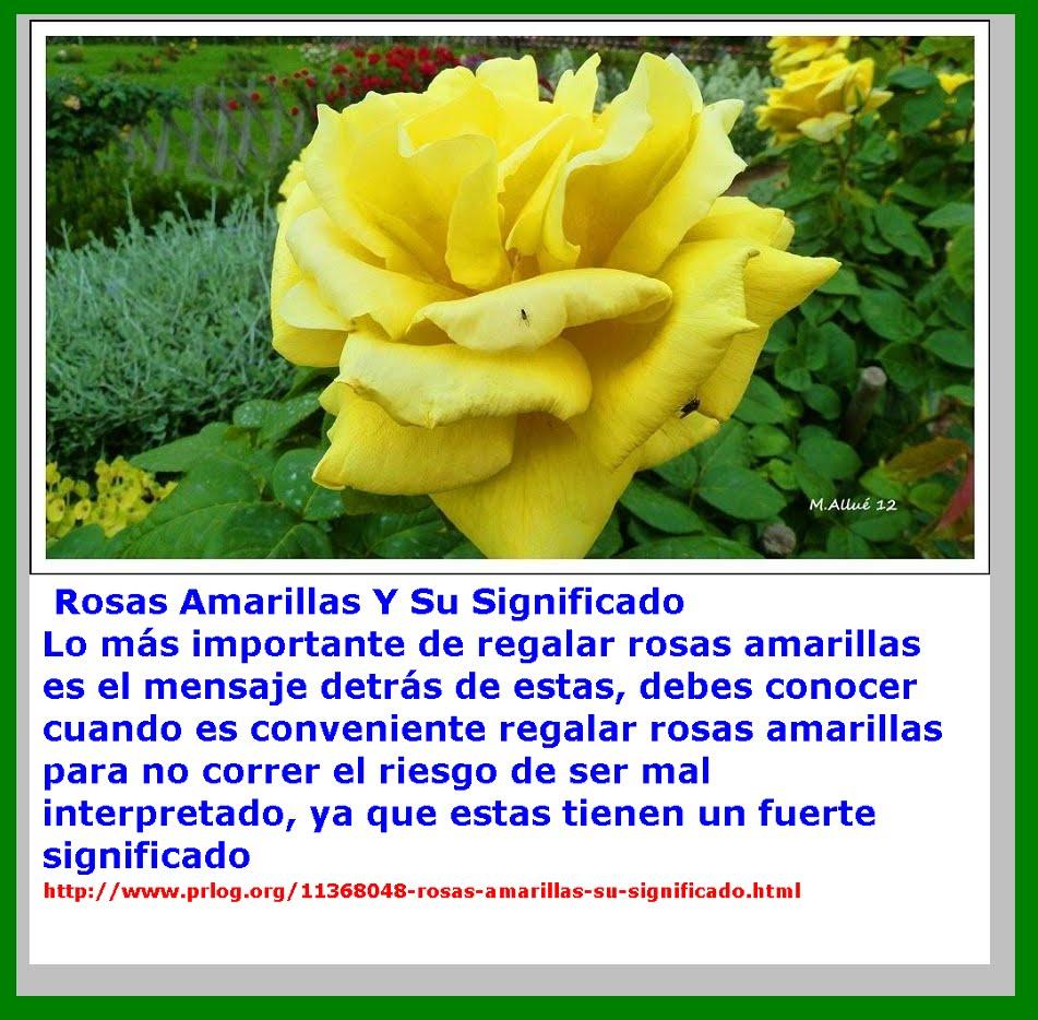 Cada dia una flor cada d a una flor y un saludo - Significado de las rosas rosas ...
