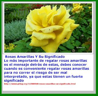 Cada dia una flor cada d a una flor y un saludo - Significado rosas amarillas ...