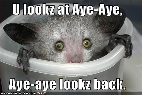 Funny Zoo Memes : Zoo animals: funny aye aye
