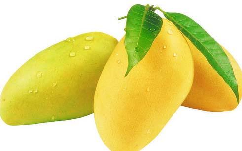 Essay on national fruit mango in hindi