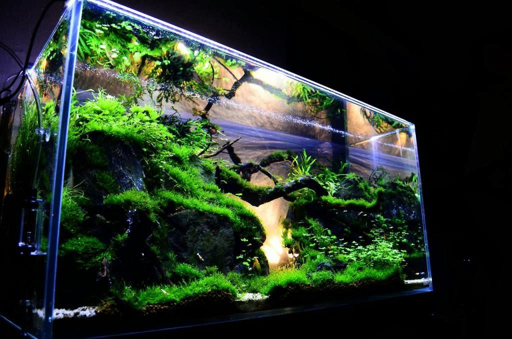 How To Aquascape Freshwater Aquarium : Pesona Aquascape Tanaman Dalam Air - Dunia Akuarium