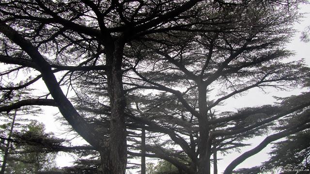 Форосский парк Форос
