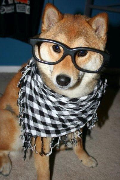 Hipster shiba inu