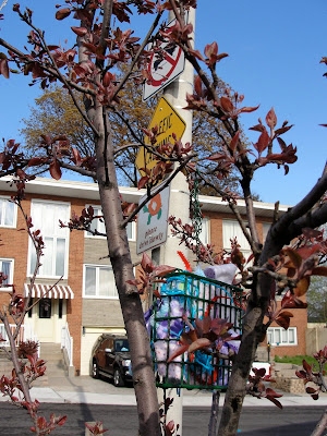 nesting supplies in a tree