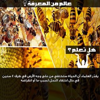 ماذا يحدث للعالم إذا غاب النحل؟