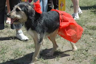 Выставк беспород собак,побед,Кубок Барбоса,фото, конкурс,друг человека,картинки