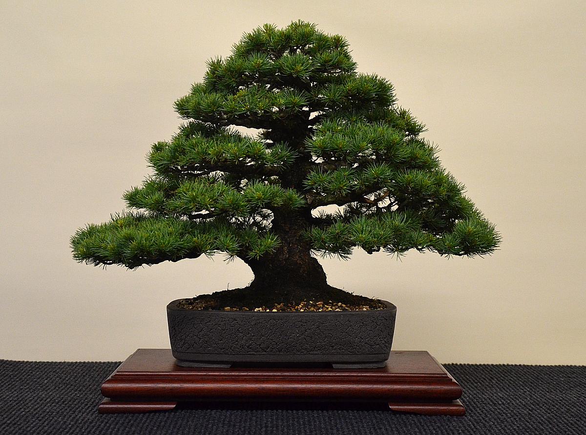 Bonsai Living Art International Bonsai And Kusamono Exhibition