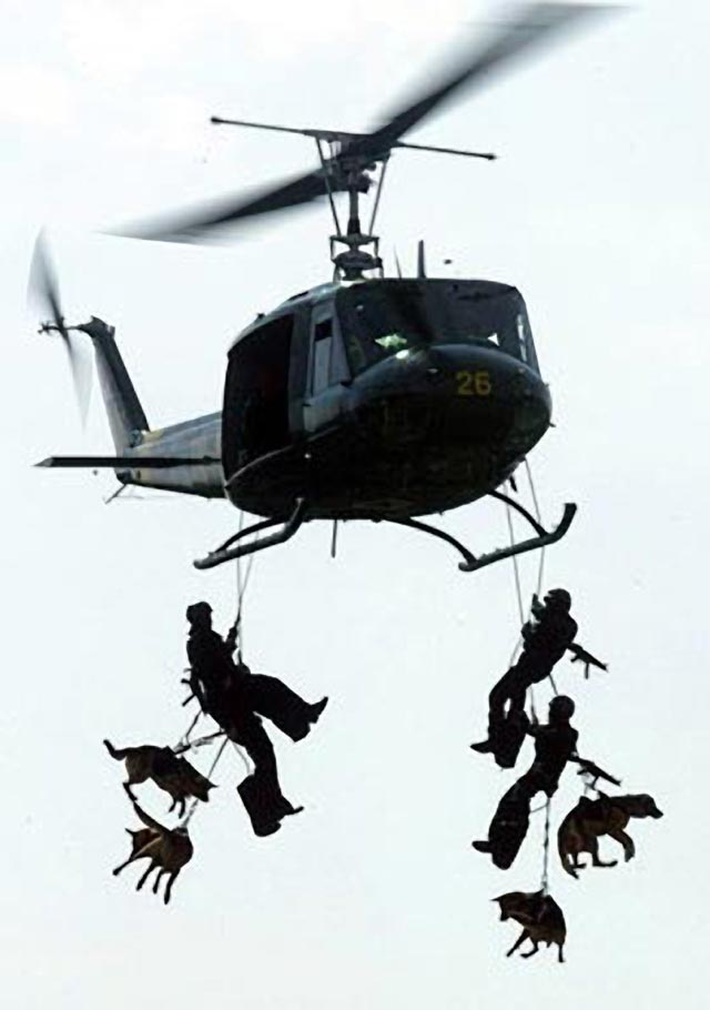 Training Military Dogs
