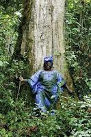 Wangari Maathai: a revolução das árvores